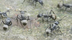 ant - stock footage