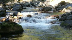 Forest stream and river rocks - stock footage