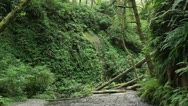 Stock Video Footage of Redwood Forest 41 Fern Canyon