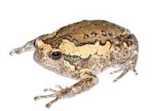 Animal frog Stock Photos