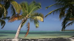 Palm on caribbean beach Stock Footage