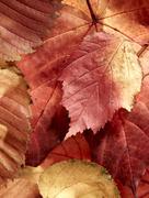 fallen autumn multi-coloured leaves - stock photo