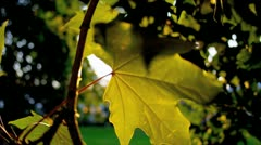 Close Up Leaves Breeze Blowing - stock footage