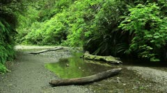 Redwood Forest 43 Fern Canyon Stock Footage