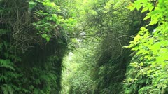 Redwood Forest 45 Fern Canyon Stock Footage