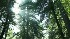Redwood Forest 63 Lady Bird Johnson Grove Stock Footage