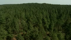 Aerial view of a Pine forest Stock Footage