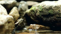 Rocks and Moss in shallow stream Stock Footage