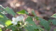 Small insect (close up) Stock Footage