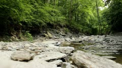 Dried up stream flowing through woods Stock Footage