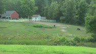 Stock Video Footage of Horses on New England Farm