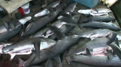 Pile of dead sharks in a shark fin trader - shark finning Indonesia Stock Footage