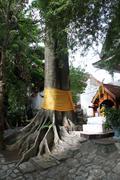 Wat phra that si chom thong wora wiharn Stock Photos