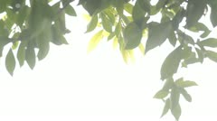 green leaf - stock footage