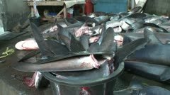 cut off shark fins - shark finning in Indonesia - stock footage