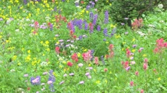 Alpine Meadow Wildflowers 05 - stock footage