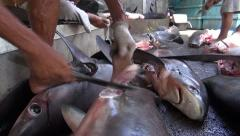Man cut off the shark fins - shark finning in Indonesia. Stock Footage