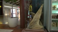 Dried whale shark fins in a store - Jakarta airport, Indonesia Stock Footage