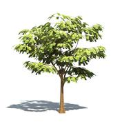 Money Tree - stock illustration