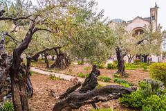 Jerusalem-garden of gethsemane Stock Photos
