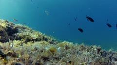 Diver snorkling Stock Footage