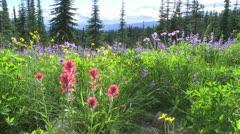 Alpine Meadow Wildflowers 08 Stock Footage