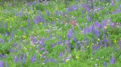 Alpine Meadow Wildflowers 11 Stock Footage