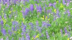 Alpine Meadow Wildflowers 12 - stock footage