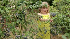 9 year old caucasian girl in summer dress picks blueberries Stock Footage