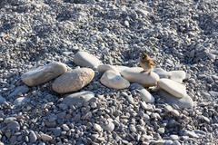 Bird standing on stones on the beach of nice Stock Photos