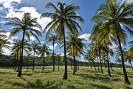 Corbens bay coconut grove Stock Photos