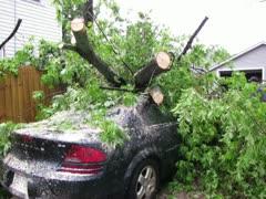 Storm damage tree on car Stock Footage