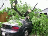 Stock Video Footage of Storm damage tree on car