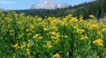Lassen 06 Kings Creek Meadows Flowers HD Footage