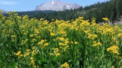 Lassen 06 Kings Creek Meadows Flowers Stock Footage