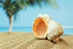seashell on sandy beach on the tropical coast - stock photo