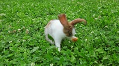 rabbit on a green lawn - stock footage