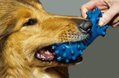 Dog bits plastic bone Stock Photos