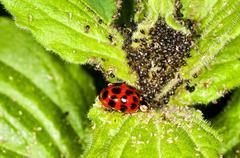 Lady`s  beetle Stock Photos