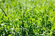 Fresh green grass under spring sunlight Stock Photos