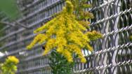 Stock Video Footage of Chain Link Fence rack focus to Bee on Flower