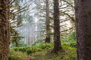Stock Photo of fog in forest
