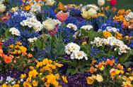 Tulips in jardin botanique, public botanic garden, bordeaux, fra Stock Photos