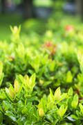 close up of bush plant - stock photo