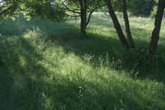 Stock Photo of grass and trees in summer