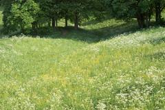Stock Photo of springtime meadow