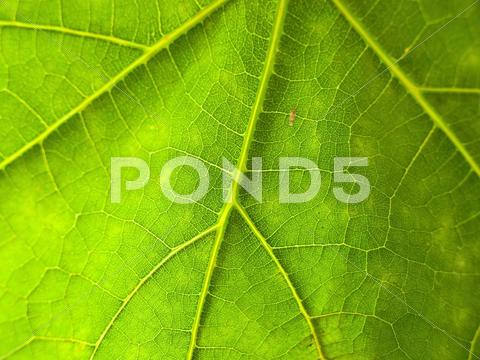 Stock photo of Green leaf