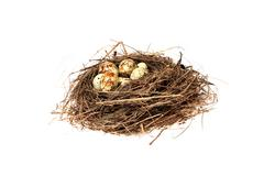 birds nest with eggs on the white background. (isolated) - stock photo