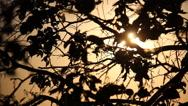 Tree light slider Stock Footage