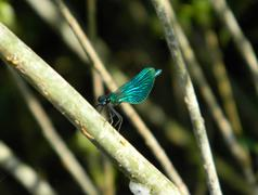moth on a tree - stock photo